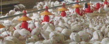 Aviaria. L'emergenza H5N8 a Porto Viro, il ruolo dei servizi veterinari dell'Ulss 19 a tutela della salute animale e umana