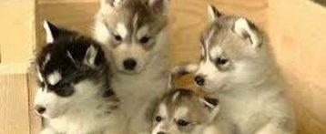 """Il 18 dicembre il webinar """"Elementi forensi per il contrasto al traffico illegale di cuccioli"""""""