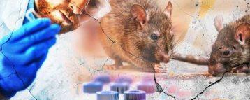 Febbre dei topi: casi in Fvg. Ecco i consigli degli esperti per chi va in montagna e in collina