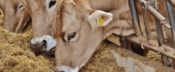 Zootecnia informatizzata per allevare in salute: dal Modello 4 alla ricetta elettronica. Un percorso anche europeo? Tavola rotonda a Padova il 26 maggio
