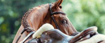 EHV-1: ripresa degli sport equestri il 12 aprile. Pubblicate dalla Fei le misure per tornare alle gare in sicurezza nell'Europa continentale