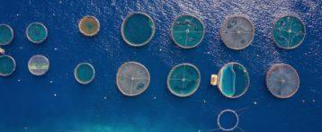 Acquacoltura, un fenomeno in crescita, sono allo studio nuove linee guida europee