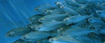 Acquacoltura. Benessere delle specie ittiche, biosicurezza degli allevamenti, sostenibilità dei sistemi produttivi: ecco le sfide per il futuro