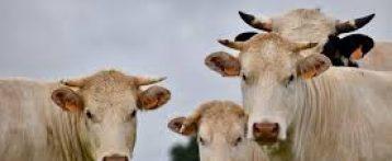 Il futuro dell'allevamento nell'UE: quale sarà il suo contributo per un settore agricolo più sostenibile?