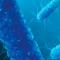 Strategie di nutrizione animale nella lotta alla AMR. Cardine per la corretta funzionalità dell'apparato gastroenterico e contributo nel ridurre l'uso di antimicrobici negli animali del settore zootecnico