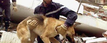 Le attività di soccorso degli animali negli scenari di protezione civile, un corso a Verona il 26 e 27 gennaio