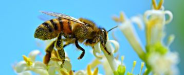 I giorni del miele. L'evento di ottobre sulle api quest'anno si sdoppia. Una giornata a Mantova e una a Lazise riservate ai medici veterinari
