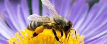Il controllo sanitario apiario tra vecchie e nuove normative, un convegno Simevep il 7 ottobre a Lazise nell'ambito dei Giorni del miele