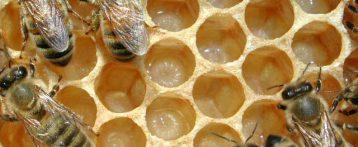 Veneto. Norme per la tutela, lo sviluppo e la valorizzazione dell'apicoltura. Il testo e le novità della nuova legge regionale