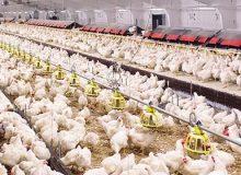 A breve Efsa illustrerà il nuovo parere sui Pfas di interesse alimentare. E negli Usa si finanzia la ricerca per proteggere l'agricoltura dalle pressioni ambientali