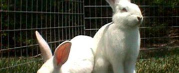 Ricerca. Evidenza sperimentale sulla suscettibilità del coniglio quale animale da laboratorio all'infezione sperimentale con Sars-CoV-2