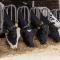 Alimentazione animale, rapporto 2016 controlli ufficiali: 28.705 ispezioni con 10.718 campioni prelevati. Più ispezioni e più sanzioni del 2015