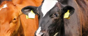 Stati Uniti: l'USDA annuncia 3 mld per agricoltura, salute degli animali e nutrizione, e una nuova iniziativa per il clima richiedendo il contributo pubblico.