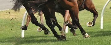 Il benessere del cavallo atleta, un corso Ecm in due giornate a Fieracavalli 2020