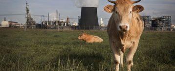 Sostanze chimiche negli alimenti, ad ognuna la sua valutazione. Documento congiunto di Efsa e Echa come contributo alla strategia Ue per la sostenibilità e al Green Deal