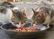 """Casi di pancitopenia felina nel Regno Unito: un problema di economia circolare? Attenzione ai """"sottoprodotti"""" da cicli """"non food"""" che entrano nei circuiti """"food"""""""