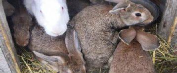 Dal Minsalute nuove Linee guida per la tutela del benessere del coniglio allevato per la produzione di carne. Obiettivo gli standard degli allevamenti europei