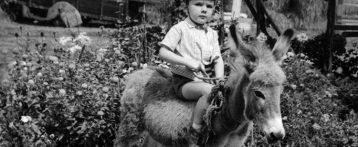 """Fieracavalli Verona 2019, venerdi 8 novembre il convegno """"Gli asini negli interventi assistiti con gli animali: l'attenzione che si meritano"""""""