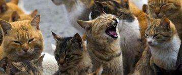 Lyssavirus, controllo anche sui gatti. Nuova ordinanza del sindaco di Arezzo: provvedimenti di prevenzione necessari per la salvaguardia e tutela della salute pubblica