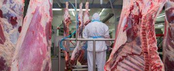 Focolai nei macelli e veterinari contagiati, il Sivemp Veneto: subito nuove valutazioni dei rischi, protezioni adeguate, trasparenza e procedure tempestive
