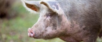 Ulss 5. Benessere animale negli allevamenti: un seminario per sviluppare un tema di stretta attualità. Importante momento formativo per imprenditori e medici veterinari