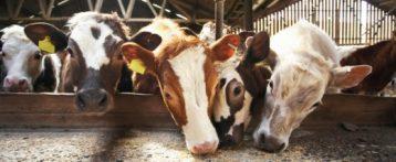 Sanità pubblica veterinaria. Dal Ministero nuove indicazioni per la riprogrammazione dei controlli ufficiali su mangimi e benessere animale