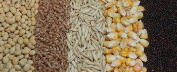 Mangimi, ICCF pubblica le linee guida per la produzione. Il documento di orientamentofornisce informazioni importanti per la valutazione della sicurezza degli ingredienti