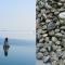 Molluschi bivalvi, un portale web sullo stato sanitario degli ambiti di monitoraggio nella Regione del Veneto