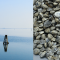 Molluschi bivalvi, l'IzsVe partecipa al progetto per la visualizzazione dello stato sanitario degli ambiti di monitoraggio in Veneto