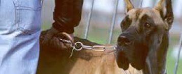 Aggiornamento per veterinari sui corsi formativi per proprietari di cani e approfondimenti sul comportamento aggressivo, un corso a Verona