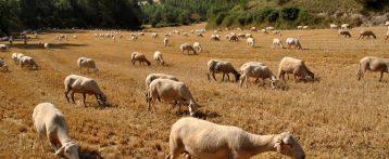 Interrogazione della Camera sulle iniziative per fronteggiare i nuovi focolai di Blue Tongue in Sardegna. Speranza: impegno del Ministero per affrontare la carenza di veterinari