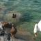 Aviaria ad alta patogenicità. Due nuovi focolai in allevamenti rurali della provincia di Padova. Colpiti volatili selvatici stanziali e alcuni domestici