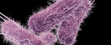 Tornano a crescere le infezioni da Salmonella dopo 10 anni. Salgono anche i casi di Listeria e Campylobacter. Rapporto Ecdc-Efsa sulle zoonosi