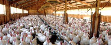Influenza aviaria ad alta patogenicità, il Minsalute proroga al 28 febbraio le misure di biosicurezza e riduzione del rischio