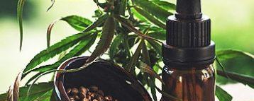 Sicurezza alimentare, in Gazzetta il decreto che definisce i livelli massimi di THC negli alimenti
