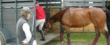 Corso di formazione per conducenti e guardiani di veicoli stradali che trasportano animali, dal 9 giugno all'Ordine dei veterinari di Verona