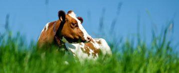 Il Benessere animale nella programmazione per lo sviluppo rurale 2014-2020 nell'Unione europea. Analisi  critica della misura 14