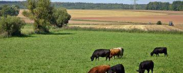 WWF all'ONU: allevamento estensivo come strategia di conservazione della biodiversità