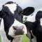 Zootecnia, parte progetto di riduzione gas serra in allevamento. Strategie per ridurre l'impronta di carbonio del 15% nei prossimi dieci anni