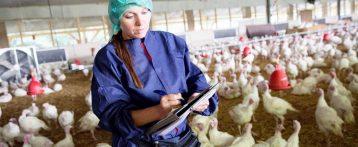Attivazione sistema regionale di sorveglianza della Blue Tongue, monitoraggio dell'influenza aviaria e delle zoonosi. La delibera è sul Bur