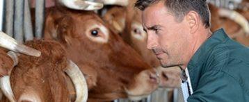 Il veterinario di fronte alla sua attività fra conoscenza delle problematiche di allevamento e gestione della propria professione, un corso a Montebello dal 30 maggio