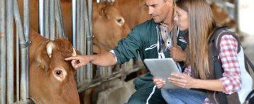 Epidemie animali. Regione attiva con l'Izsve rete informativa in tempo reale che permetterà ai servizi veterinari di gestire tutti i dati