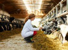 Relazione audit Dgsante  2021 in Italia. Criticità macellazione d'urgenza con animali che non rispondono ai requisiti UE. Il Minsalute avvia aggiornamento procedure