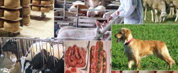 Prospettive e criticità per la sanità veterinaria veneta, intervista di Professione Veterinaria al segretario regionale Sivemp Maria Chiara Bovo