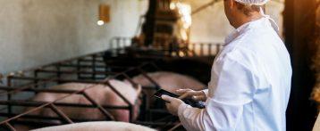 Macellazioni speciali d'urgenza, ristabilita la terzietà dei controlli a tutela della salute animale e della sicurezza alimentare. Soddisfazione dei veterinari del Ssn
