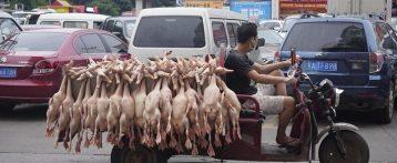 Wet market, una minaccia per animali e salute pubblica che deve finire. In questi luoghi sofferenza animale e rischi per la salute pubblica sono un connubio esplosivo. Per fermare le prossime pandemie si parta da qui